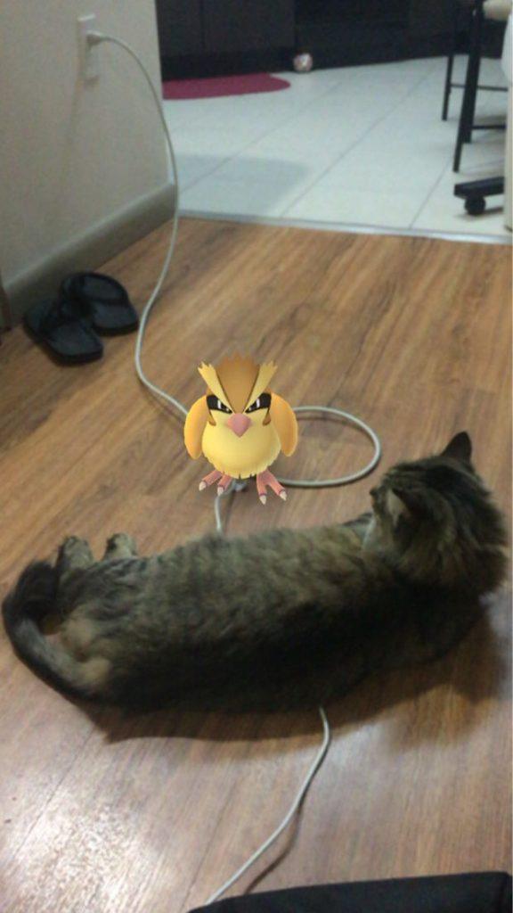 gato y pidgey