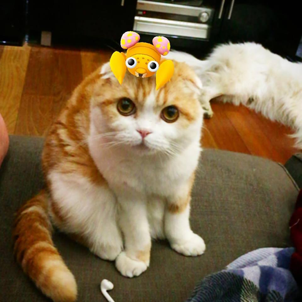 gato y pokemon