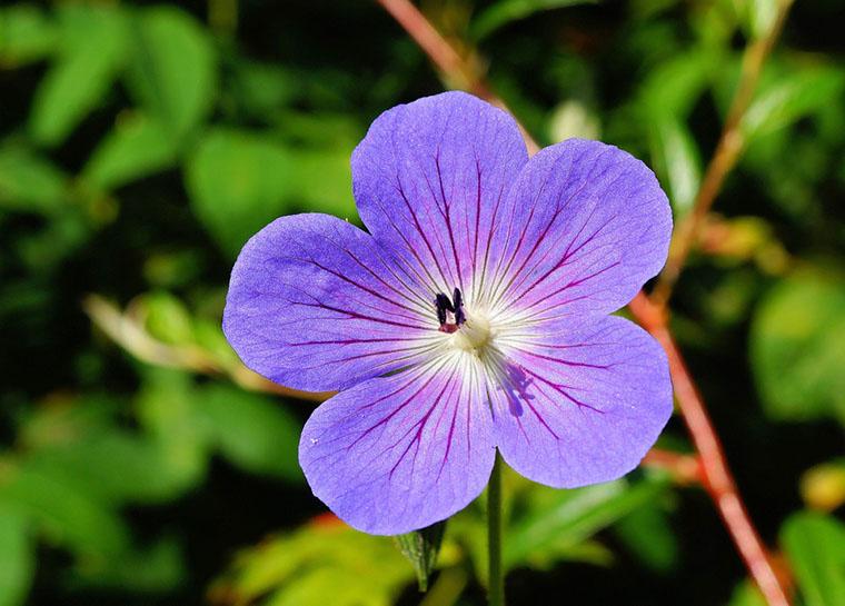 Escoge la mejor perspectiva para tomar foto flor