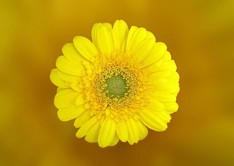 La flor es lo unico importante difuminar fondo